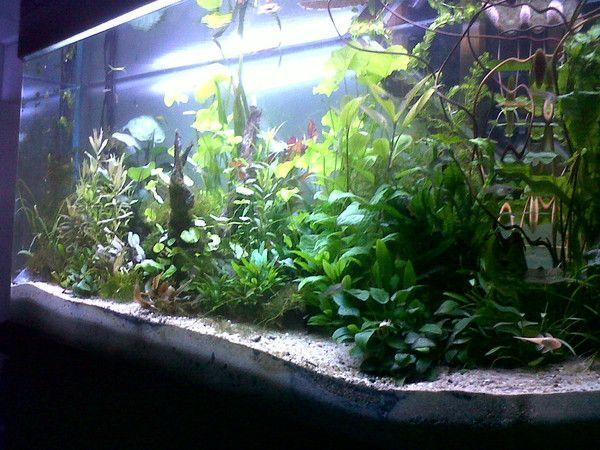 installation et entretien d 39 un aquarium plant 500 litres. Black Bedroom Furniture Sets. Home Design Ideas
